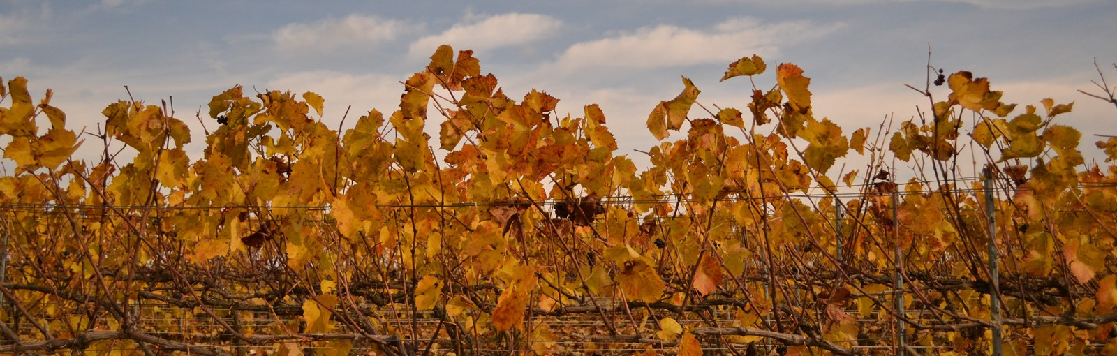 Tours Champagne - Burgundy - Berry - Multi-régional - Circuitos desde Paris