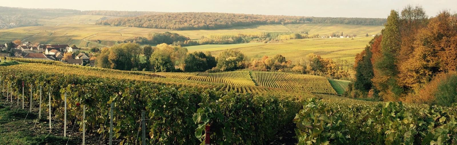 Tours Champagne - Borgoña - Multi-régional - Circuitos desde Paris